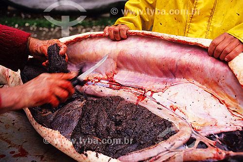 Pesca no rio Hudson nos Estados Unidos - América do Norte - Caviar