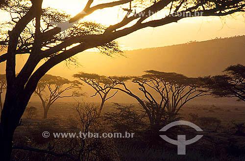 Amanhecer - Parque Nacional Serengueti - Tanzânia - África