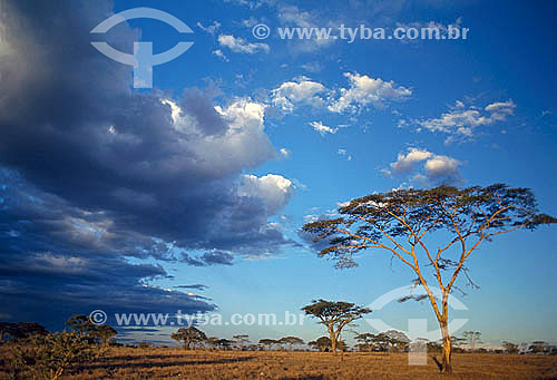 Parque Nacional Serengueti - Tanzânia - África