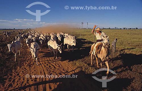 Agropecuária/ pecuária : vaqueiro manejando o gado, região sul do Brasil Sul do Brasil / Data: 2009