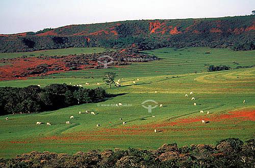 Agropecuária/ pecuária: fazenda de gado Nelore, distrito de Morro vermelho, município de Mineiros, Goiás, Brasil. Data: abril, de 2002