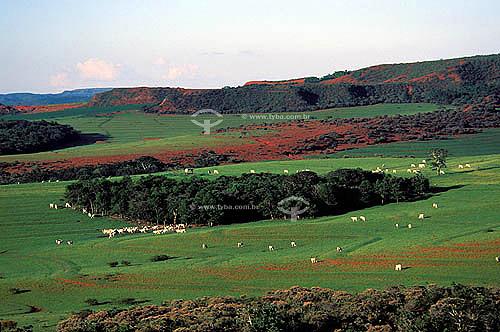 Agropecuáris/ pecuária : Fazenda de gado Nelore, distrito de Morro Vermelho, Município de Mineiros, Estado de Minas gerais, Brasil. Data: Abril de 2004