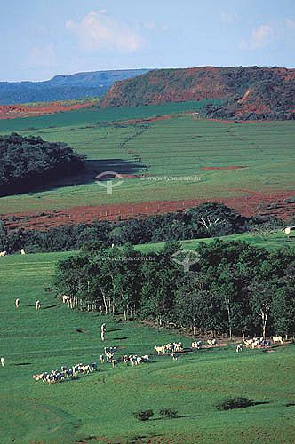 Agropecuária/ pecuária: fazenda de gado Nelore, distrito do Morro vermelho, município de mineiros, Goiás, Brasil. Data: Abril de 2002