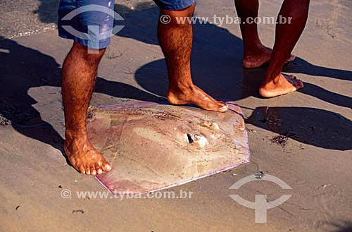 Pesca de Arraia - Jericoacoara - CE - Brasil  - Jijoca de Jericoacoara - Ceará - Brasil