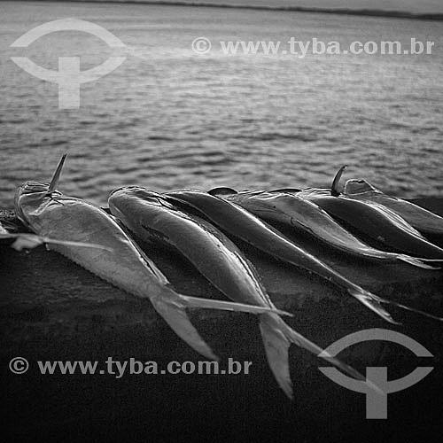 Detalhe de peixes - Barra de Guaratiba, litoral sul do RJ, próxima à Restinga da Marambaia - Rio de Janeiro - Brasil  foto digital  - Rio de Janeiro - Rio de Janeiro - Brasil