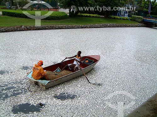 Peixes mortos flutuando na Lagoa Rodrigo de Freitas ao lado do clube Caiçaras - Rio de Janeiro - RJ - Brasil  - Rio de Janeiro - Rio de Janeiro - Brasil