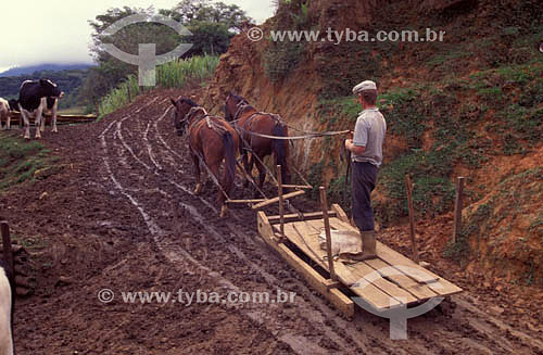 Colonos de origem alemã:  bestas de carga transportam lavrador sobre rudimentar engenho, conhecido como
