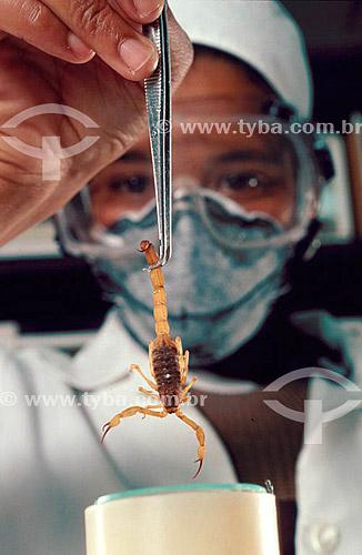 Cientista em laboratório segurando espécime de escorpião com pinça - Brasil