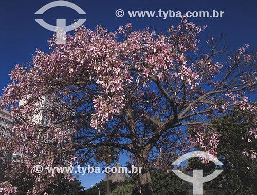 Assunto: Árvore (Chorisia speciosa) na Praia de Botafogo, com Pão de Açúcar ao fundoLocal: Rio de Janeiro - RJ - BrasilData: 14/06/2005