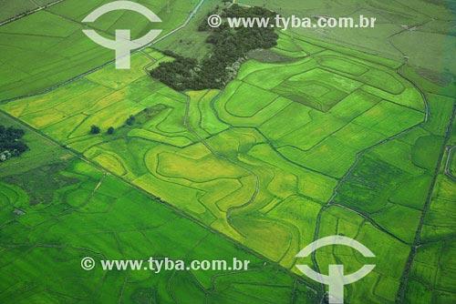 Assunto: Vista aérea de plantações - AgriculturaLocal: Noroeste do Rio Grande do Sul - Região de Cruz AltaData: Março de 2008