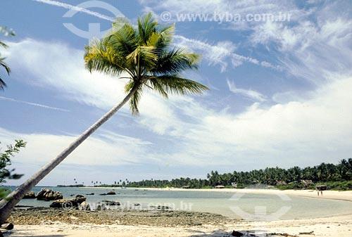 Assunto: Coqueiro com inclinação diagonal em praiaLocal: Morro de São Paulo - BAData:
