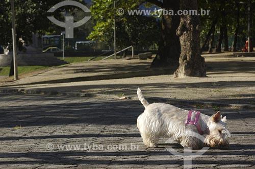 Assunto: Cachorro passeando