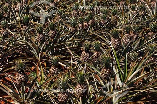 Assunto: Plantação de AbacaxiLocal: Triangulo Mineiro -MGData: Março de 2008