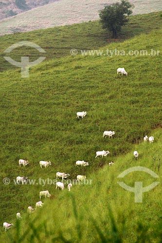Assunto: Paisagem rural com gado no pasto, próximo à Miracema  / Local: Noroeste Fluminense - RJ / Data: 06/2008