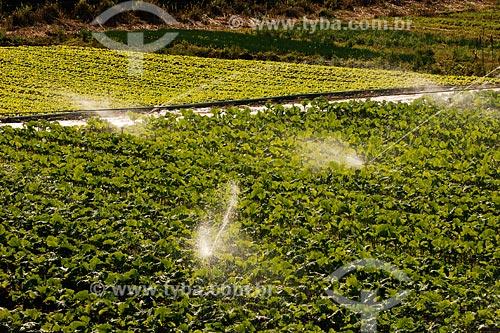 Assunto: Irrigação mecanizada de plantação de hortaliças, São José do Vale do Rio Preto / Place: Serra de Teresópolis -  RJ / Data: 06/2008