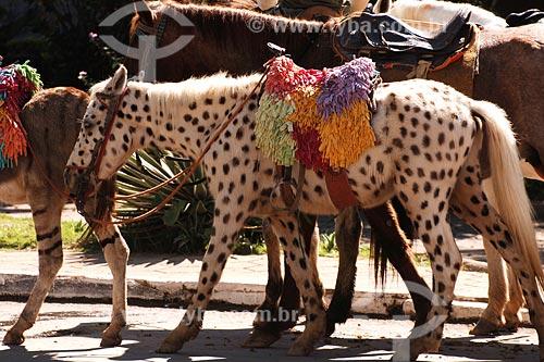 Assunto: Raposo - Turismo: Cavalinho pintado para passear com crianças / Local:  Noroeste Fluminense - RJ / Data: 06/2008