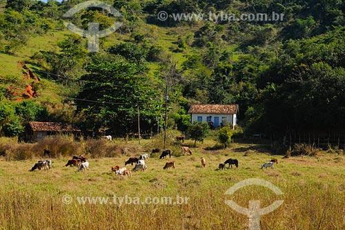 Cena rural - Casa e gado no pasto entre as cidades de Miracema e Raposo - Noroeste Fluminense - Rio de Janeiro / Data: 2008