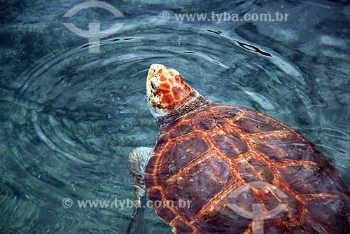 Assunto: Tartarugas - Projeto TAMAR / Local: Linhares - ES / Data: Junho de 2008