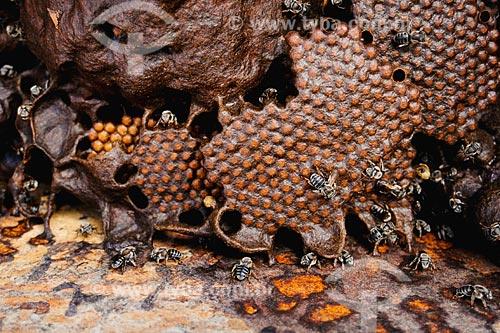 Assunto: Apicultura - Colméia de abellhas no Povoado de Mutum / Local: Anajatuba - MA / Data: 08/2008