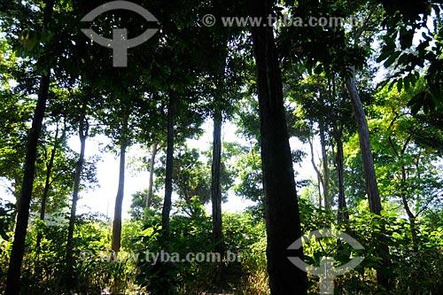 Assunto: Praça-reserva conhecida como Bosque com árvores nativas / Local: Buriticupú - MA / Data: 08/2008