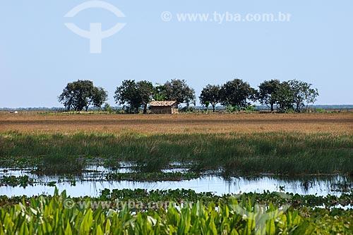 Assunto: Igarapé do Troita / Local: Anajatúba - Baixada Ocidental Maranhense - Alagados / Data: 08/2008
