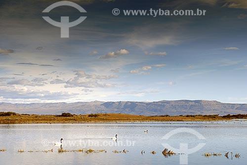 Assunto: Laguna Nimez / Reserva de pássaros nas cercanias de El Calafate / Local: El Clafate - Argentina / Data: 02/2008