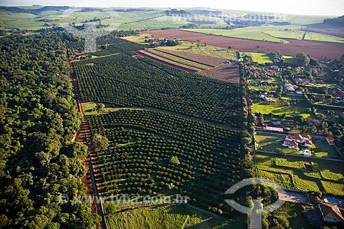 Assunto: Plantação de cana-de-açúcar cercada por mata nativa na região de Ribeirão Preto / 2008