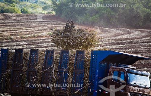 Assunto: Usina São Francisco de Etanol e Açúcar. Trabalhadores em nova plantação de cana-de-açúcar / Local: Sertãozinho - Ribeirão Preto - SP - Brasil