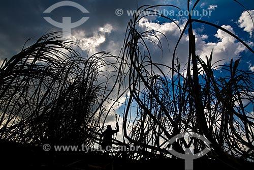 Assunto: Bóias frias cortando cana na região da cidade de Pederneiras / Local: SP - Brasil / Data: Maio 2008