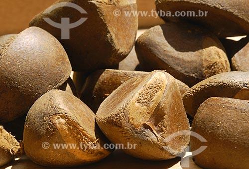 Assunto: Sementes da Amazônia - Andiroba (Carapa Guianensis) / Local: Almerim (PA) / Data: 13 de Junho de 2006