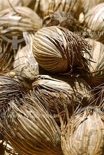 Assunto: Sementes da Amazônia - Bacabeira (Oenocarpus Bacaba) / Local: Almerim (PA) / Data: 13 de Junho de 2006