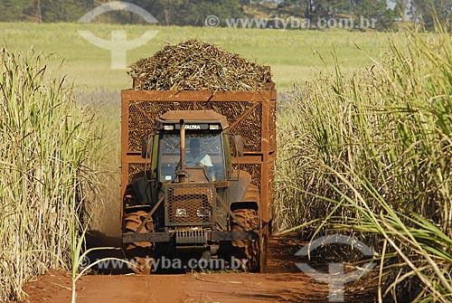 Assunto: Colheita mecanizada de cana / Local: Serrana (SP) / Data: 20 de Julho de 2006