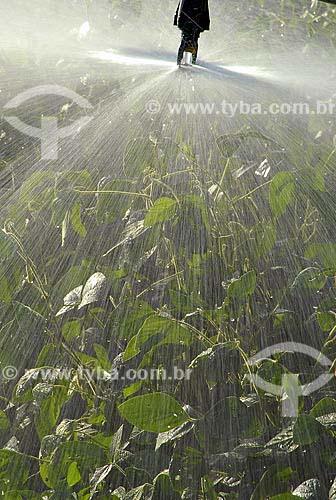 Assunto: Soja transgênica - irrigação / Local: Sorriso (MT) / Data: 8 de Agosto de 2006