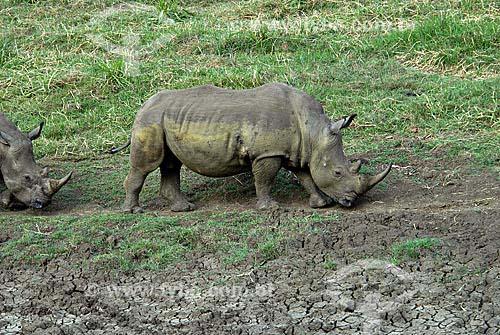Assunto: Rinocerontes - Parque Hluhluwe Imfozoli / Local: Hluhluwe - Kwazulu Natal - África do Sul / Data:14 de Março de 2007