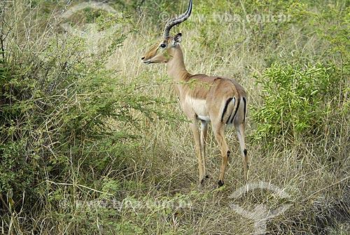 Assunto: Antílope macho - Parque Hluhluwe Imfolozi / Local: Hluhluwe - Kwazulu Natal - África do Sul / Data: 14 de Março de 2007