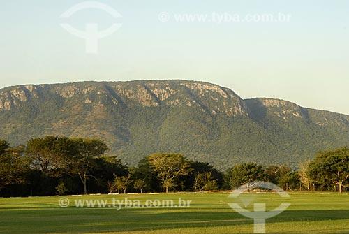 Assunto: Vegetação de savana - Montanha Fantasma (Ghost Mountain) - Umbombo Mountain / Local: Mkuze - Kwazulu Natal - África do Sul / Data: 13 de Março de 2007