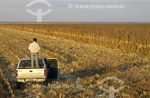 Assunto: Produtor olhando o milharal (plantação de milho) / Local: Sapezal (MT) / Data: 12 de Junho de 2007Autor: Delfim Martins