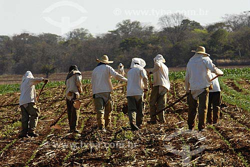 Assunto: Trabalhadores rurais fazendo capina com enxada / Local: Cachoeira Dourada (MG) / Data:10 de Setembro de 2007