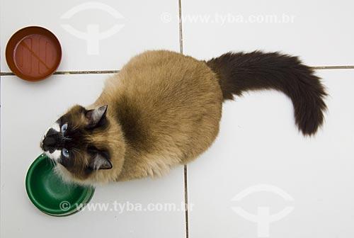 Assunto: Gato olhando para cima - Animal doméstico / Local: São Paulo - SP / Data: Setembro de 2008