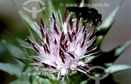 Assunto: Detalhe de inseto em flor do Jardim Botânico / Local: Rio de Janeiro - RJ - Brasil / Data: 1994