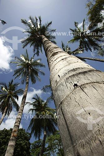 Assunto: Coqueiros na Praia do Meireles / local: Fortaleza - Ceará (CE) - Brasil / Data: Janeiro de 2009