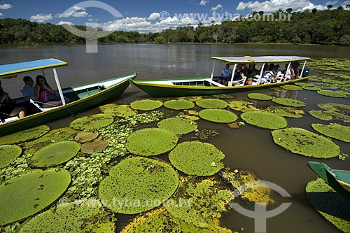 Assunto: Turistas observando Vitórias-Régia (Victoria amazonica) em passeio turístico / Local: Perto de Manaus - Amazonas (AM) - Brasil / Data: 06/2007