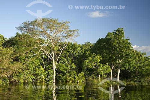 Assunto: Mata de Igapó inundado na beira do Rio Negro / Local: Perto do encontro das águas dos rios Solimões e Negro, perto de Manaus - Amazonas - Brasil / Data: Junho de 2007