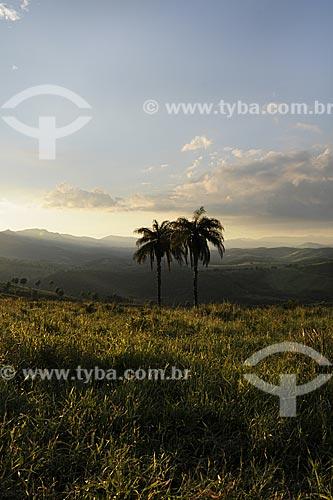 Assunto: Paisagem com palmeiras, próximo à Pedra Pintada e Barão de Cocais na Serra do Espinhaço / Local: Minas Gerais (MG) - Brasil / Data: 22/04/2009