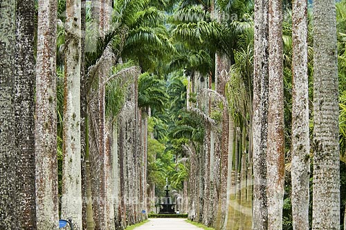 Assunto: Palmeiras Imperiais no Jardim Botânico com chafariz ao fundo / Local: Rio de Janeiro - RJ - Brasil / Data: Dezembro de 2008