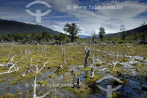 Assunto: Charco visto da trilha costeira no Parque Nacional Terra do Fogo em Ushuaia. / Local: Ushuaia - Argentina / Data: 11 / 2008