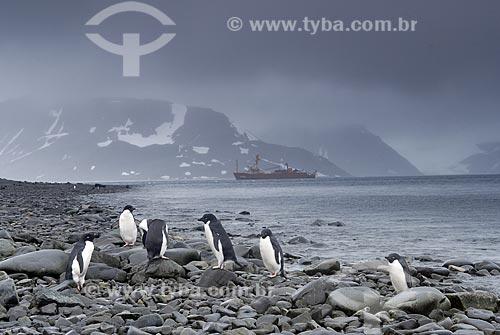Assunto: Pinguins