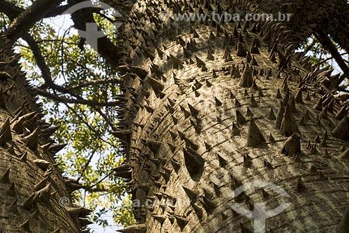 Assunto: Tronco de paineira (Ceiba speciosa, antes Chorisia speciosa)  no Parque da Aclimação / Local: São Paulo - São Paulo (SP) - Brasil / Data: 2008