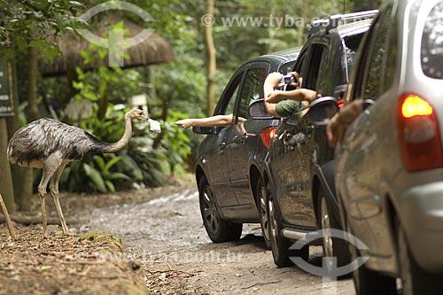 Assunto: Visitantes alimentam uma ema no Parque Zoológico de São Paulo, o maior da América Latina / Local: São Paulo - São Paulo (SP) - Brasil / Data: 2008