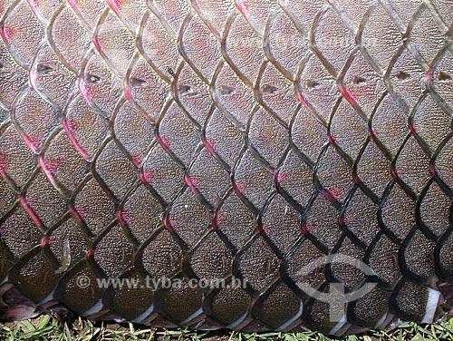 Assunto: Escamas de Pirarucu (Arapaima gigas) / Local: Perto de Santarém - Pará - Brasil / Data: Agosto de 2003